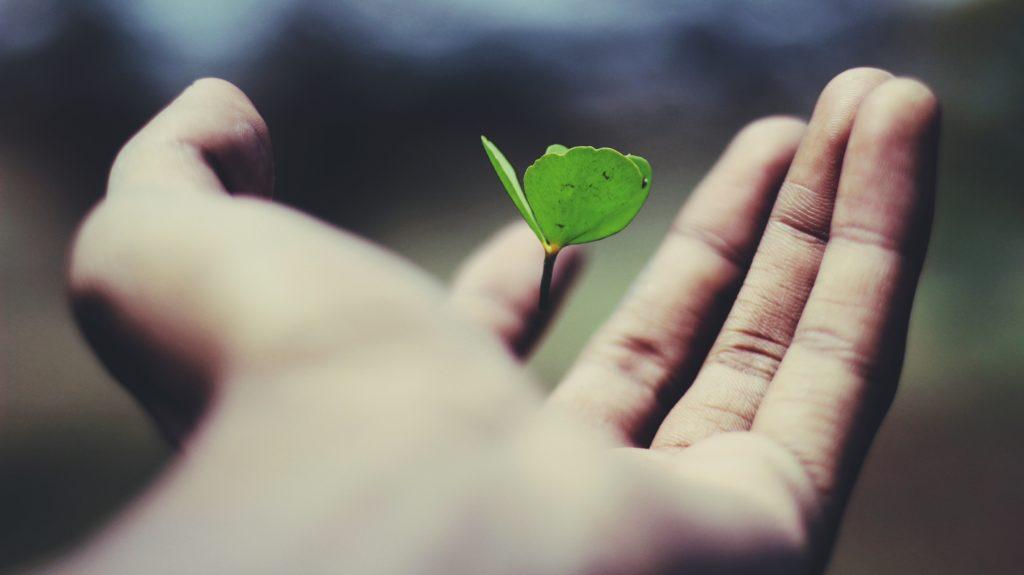 手のひらの中の小さな植物