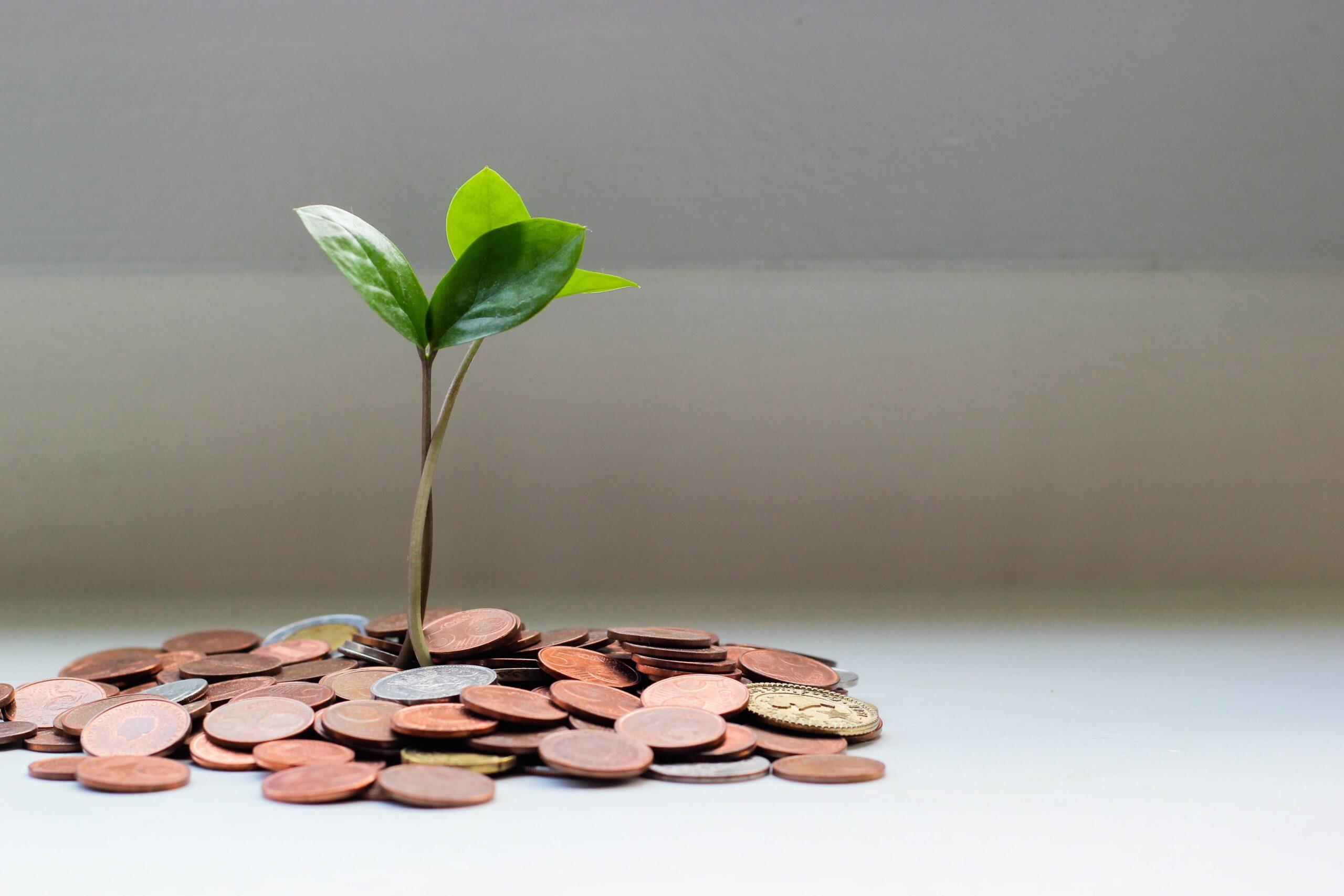 まいたお金から生まれる芽